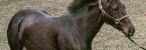 Horse Insurance Examinations
