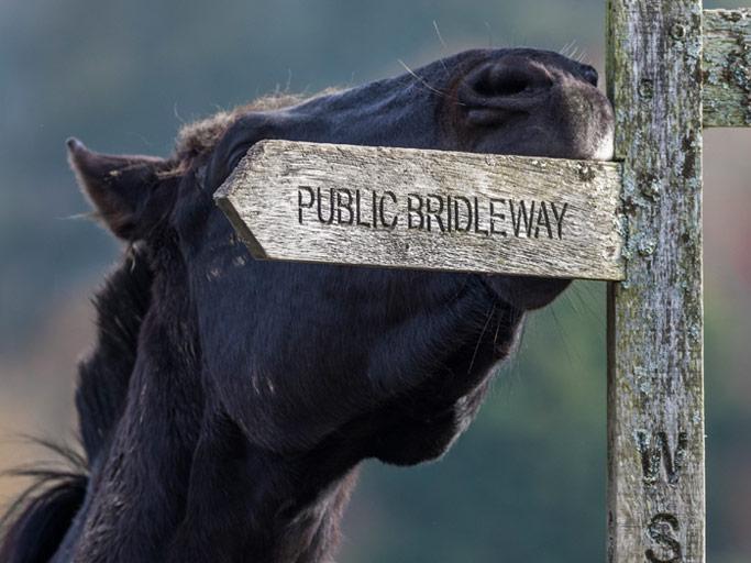 Horse on public bridleway