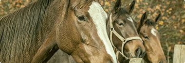 Equine Vaccinations Services